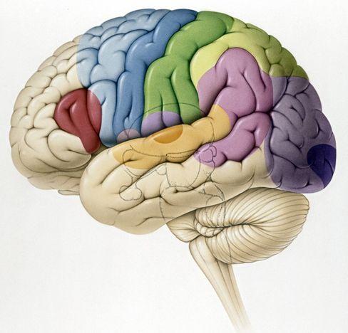 Gehirn: Unmenge elektrischer Signale