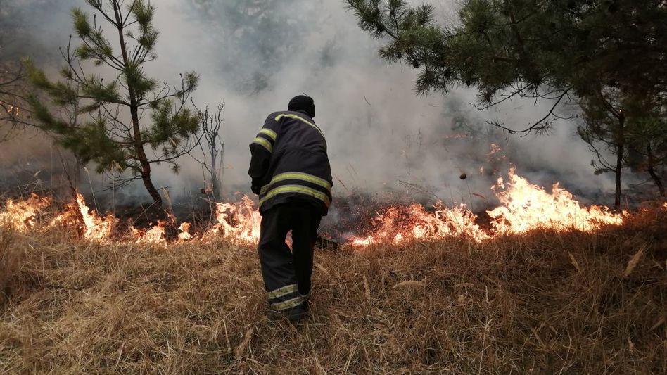 """Waldbrand in der Sperrzone um Tschernobyl: """"Das Feuer kam direkt zum Zaun des Atomkraftwerks"""""""