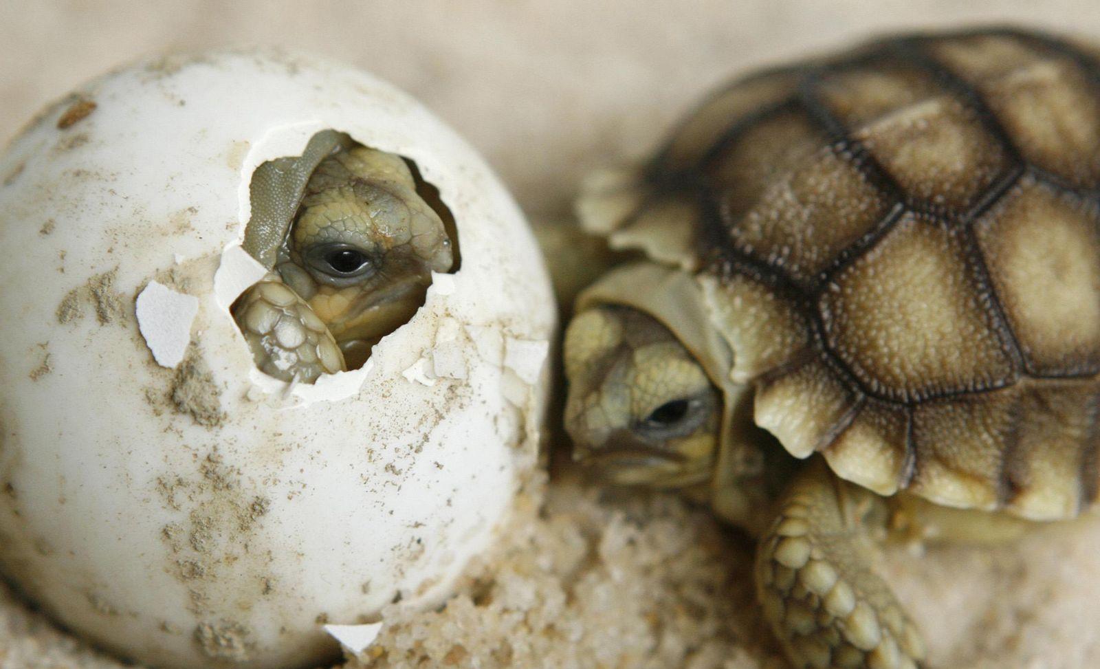 Schildkröte / Lausanne Vivarium