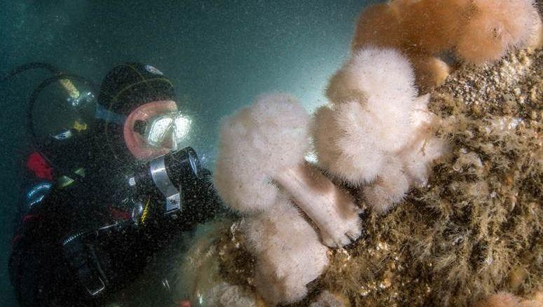 In einem der EU-Verfahren geht es um dasSchutzgebiet Sylter Außenriff: Hier schaut sich ein Taucher von Greenpeaceeinen von der Umweltschutzorganisation in der Nordsee versenkten Felsbrocken an