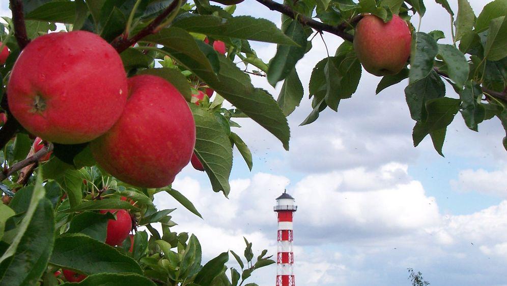 Altes Land bei Hamburg: Äpfel, Pflaumen, Obstbauern