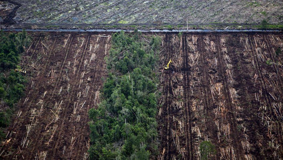 Abholzung in Indonesien (im Februar 2012): Schwieriger Kampf gegen illegales Holz