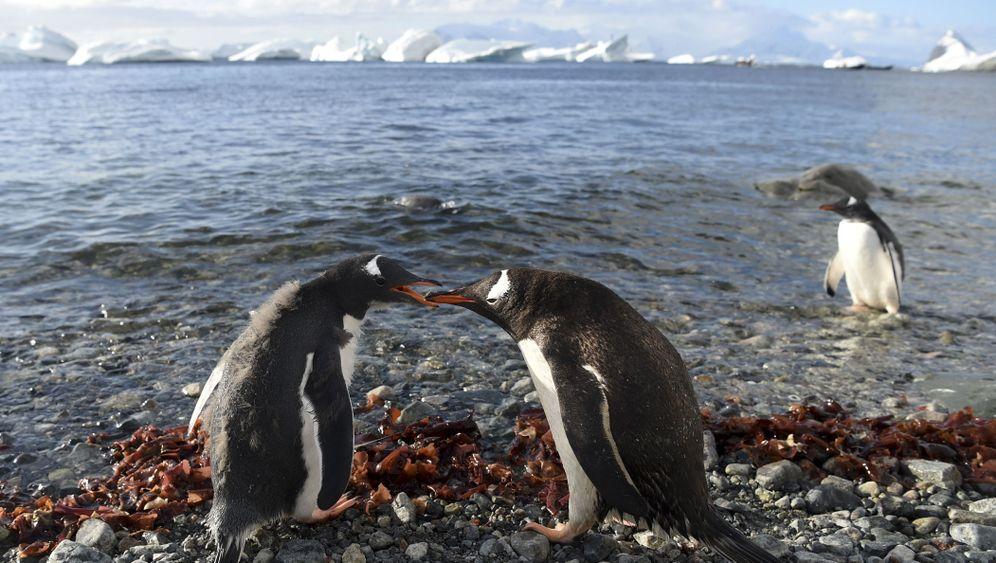 Antarktis: Bedrohte Welt aus Wasser und Eis