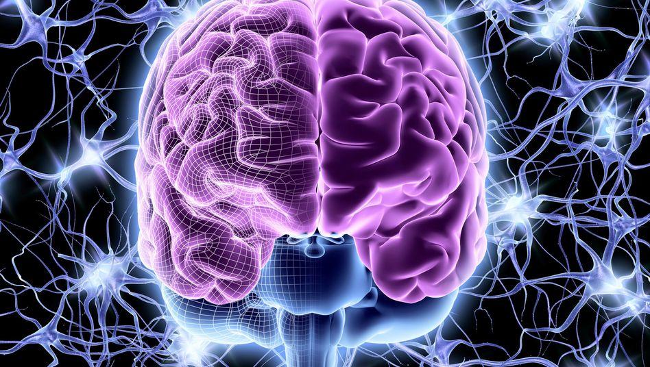 Computersimulation des menschlichen Gehirns