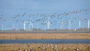 Wie viele Windräder verträgt die Nordsee?