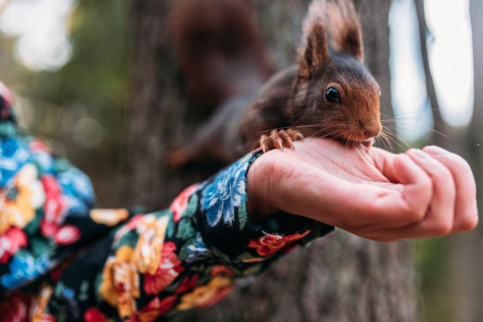 Girl Feeding Squirrel.