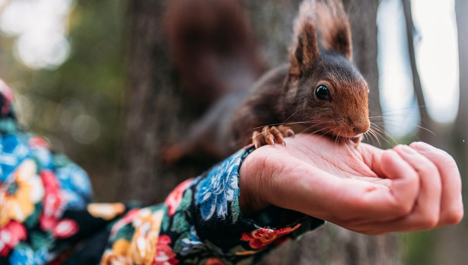 Eichhörnchen legen Vorräte mit System an – das kann man sich fürs Mitschreiben abgucken