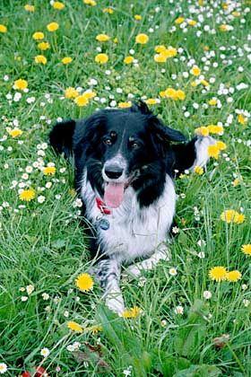 Rico: Der 200-Worte-Hund