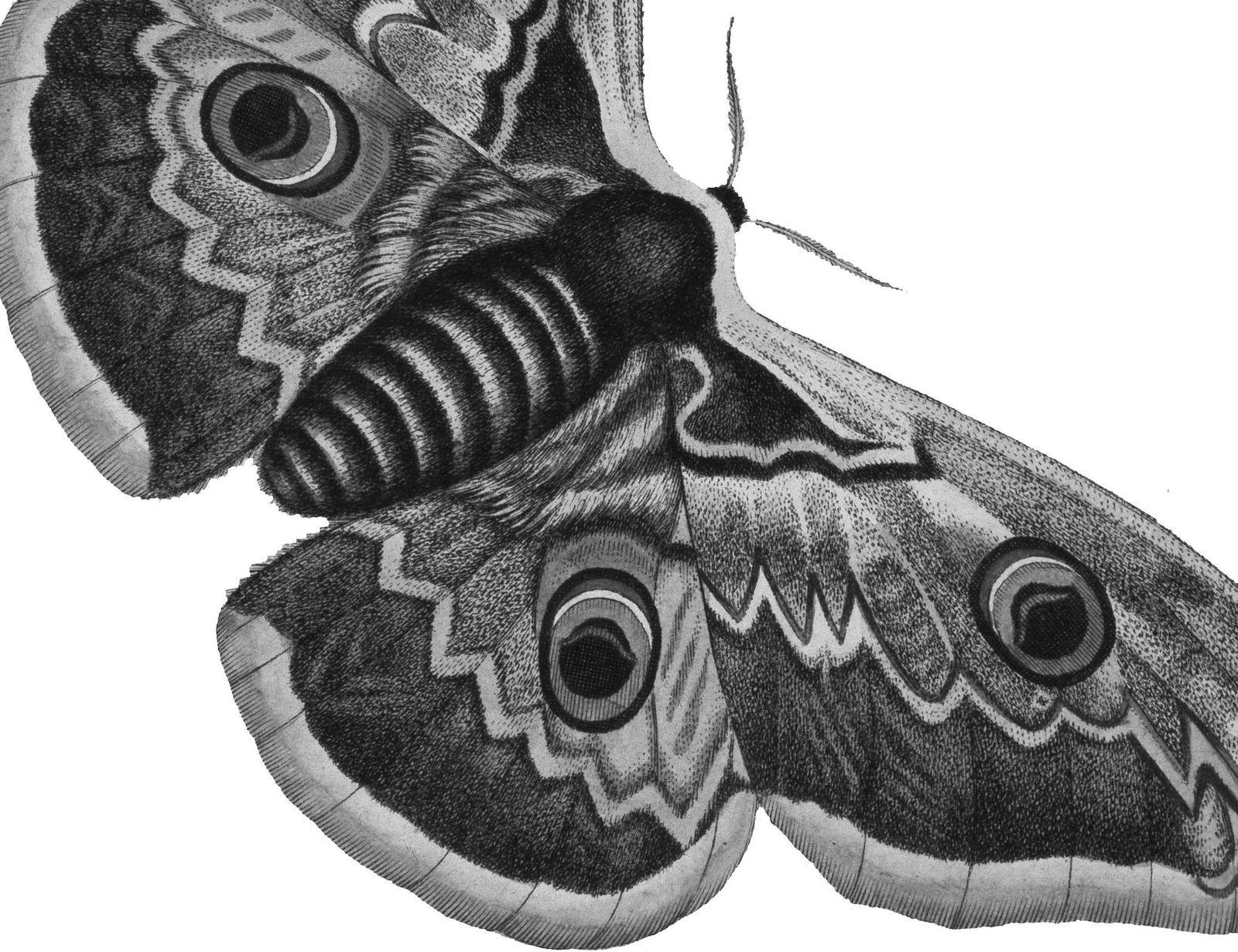 EINMALIGE VERWENDUNG Schmetterlingsreise/ Peter Henning