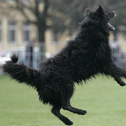 Spielender Hund: Implantat macht unfruchtbar