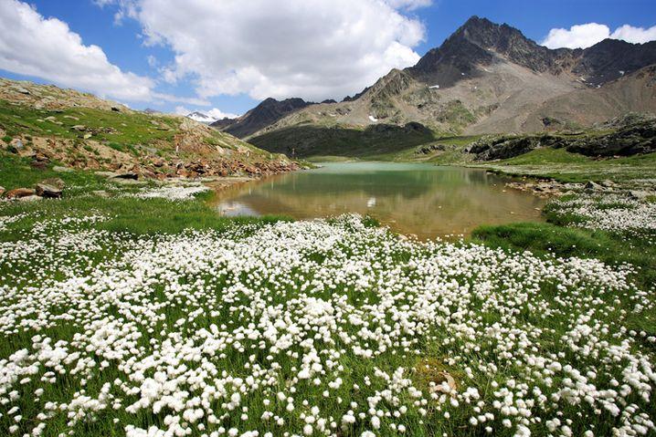 Passo di Gavia: Blumenpracht am Lago Bianco