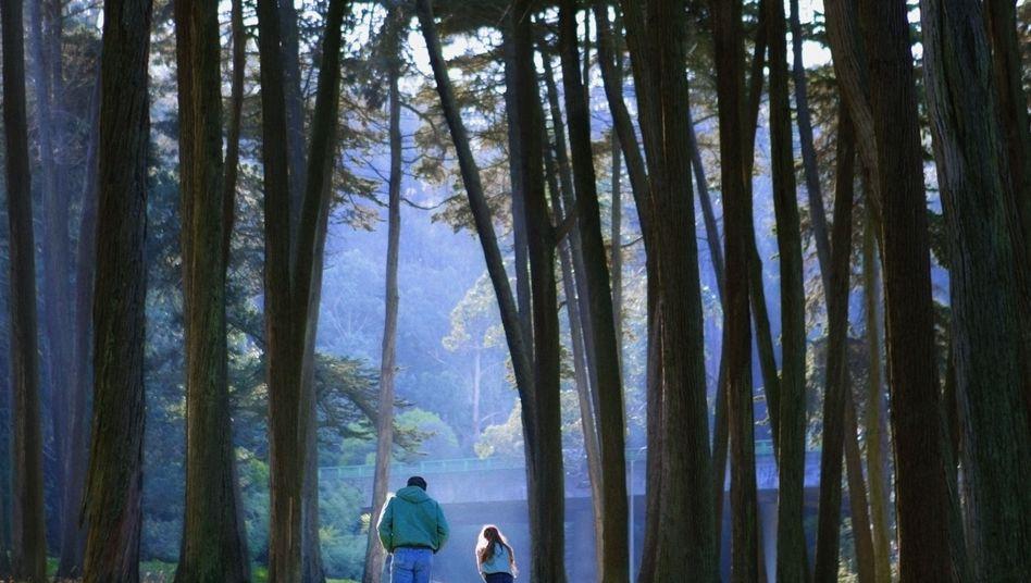 Spaziergang im Wald: Frische Luft und Bewegung - eine gesunde Kombination