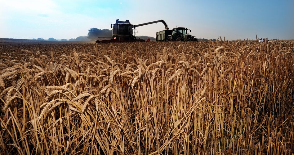 Weizenfeld bei Rendsburg: Anleger wetten auf Preise von Agrarrohstoffen