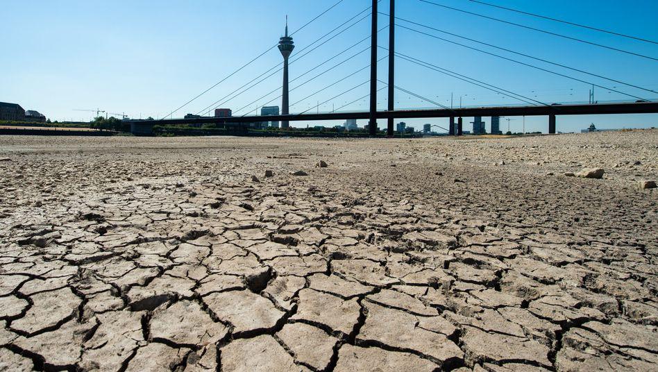 Ausgetrocknetes Flussbett des Rheins im Sommer 2018