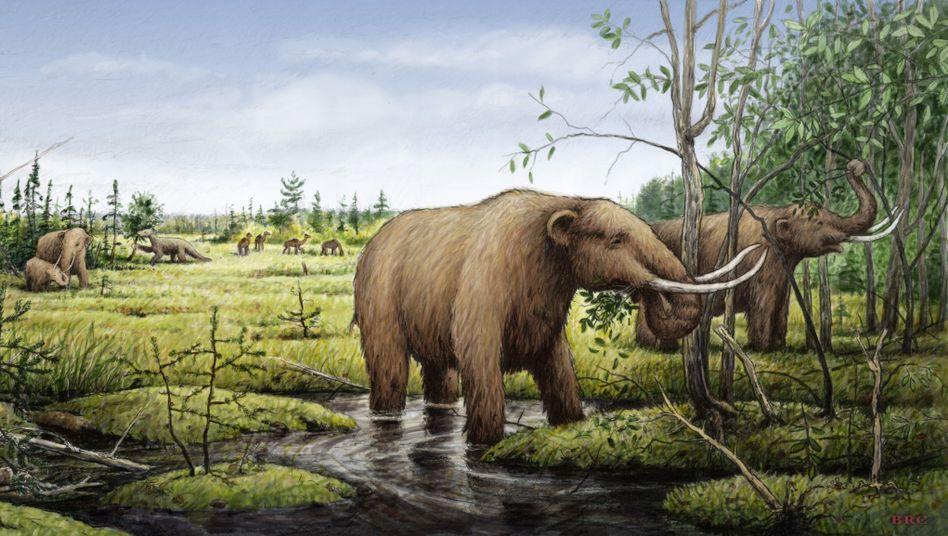 Mastodon: Die Riesensäugetiere hatten einen Einfluss auf die Vegetation