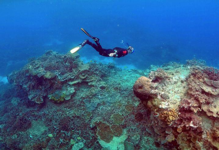 Akut betroffen: das Great Barrier Reef