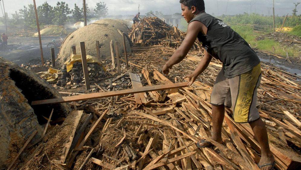 FAO-Studie zu Wäldern: China pflanzt, Brasilien holzt ab