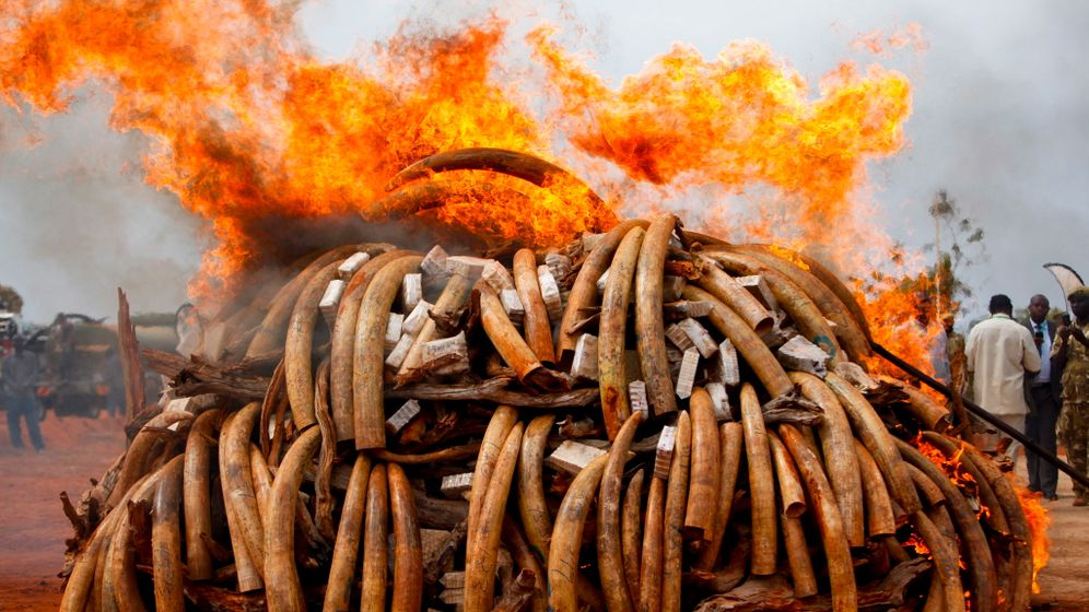 Photo Gallery: Elephant Poaching Fuels African Wars