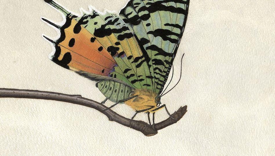 Schmetterlingsaquarell von Anita Albus: Ein wahrer Augenschmaus