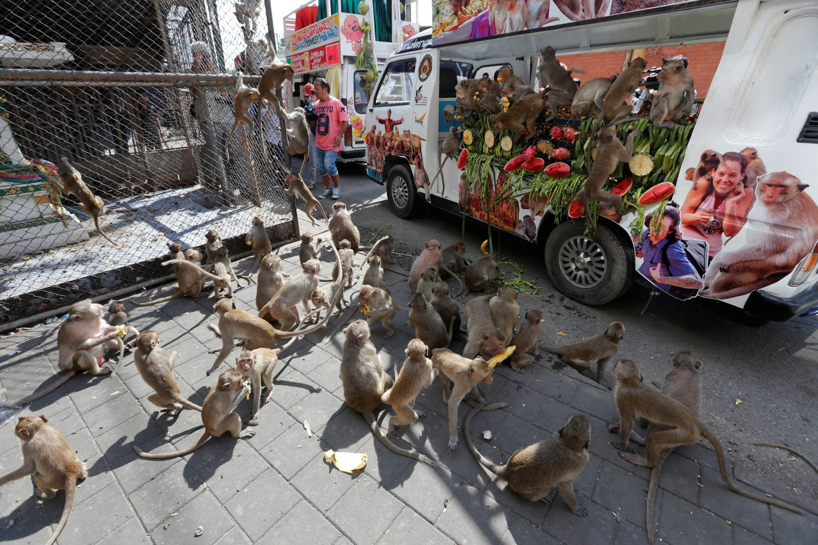 Monkeys eat fruits and vegetables during the Monkey Buffet Festival, near the Phra Prang Sam Yot temple in Lopburi province