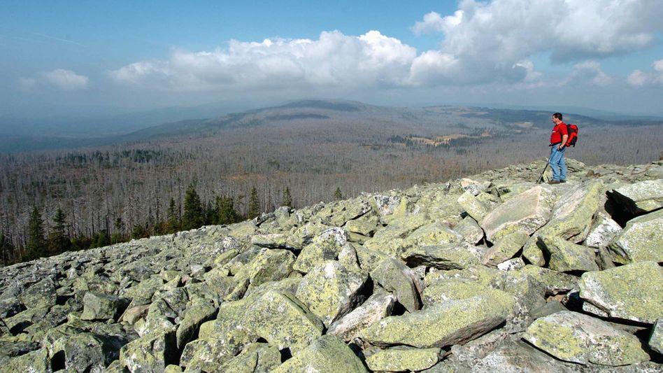 Bayerischer Wald: Der Blick entlohnt für den Aufstieg, aber reichen die Reserven auch für einen trittsicheren Abstieg?