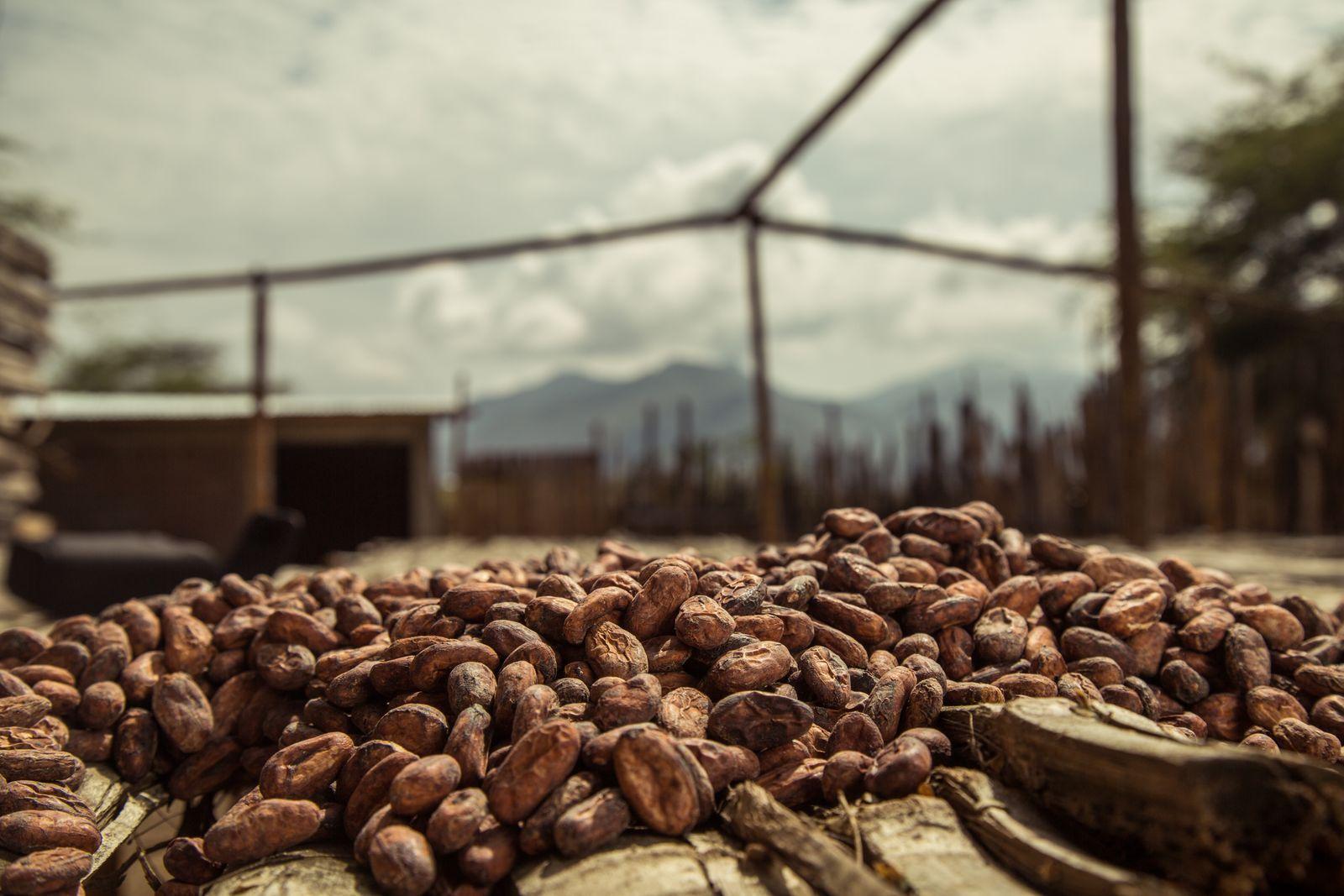 Kakao und Fairtrade