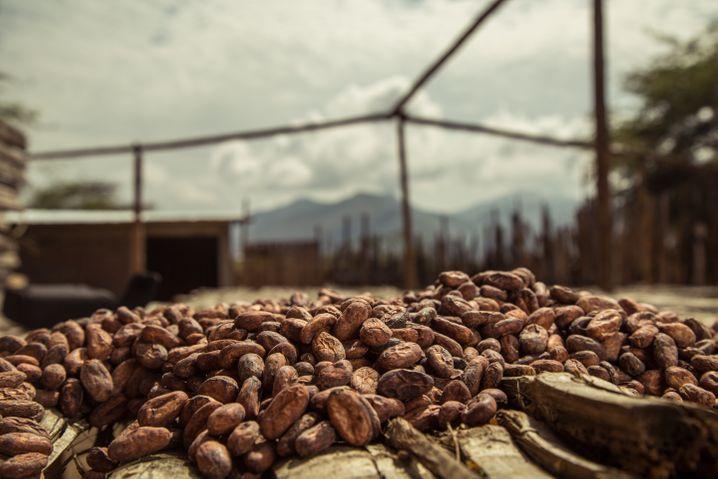 Kakaobohnen trocknen in Peru