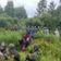 Migranten über die Grenze nach Litauen gedrängt
