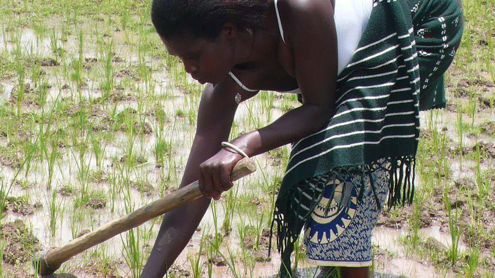 Entwicklungspolitik in Ruanda: Vom Schreckensstaat zum Musterland