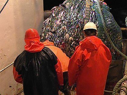 Große Aufgabe für die internationale Gemeinschaft: Illegale Fangpraktiken gefährden Fischbestände weltweit