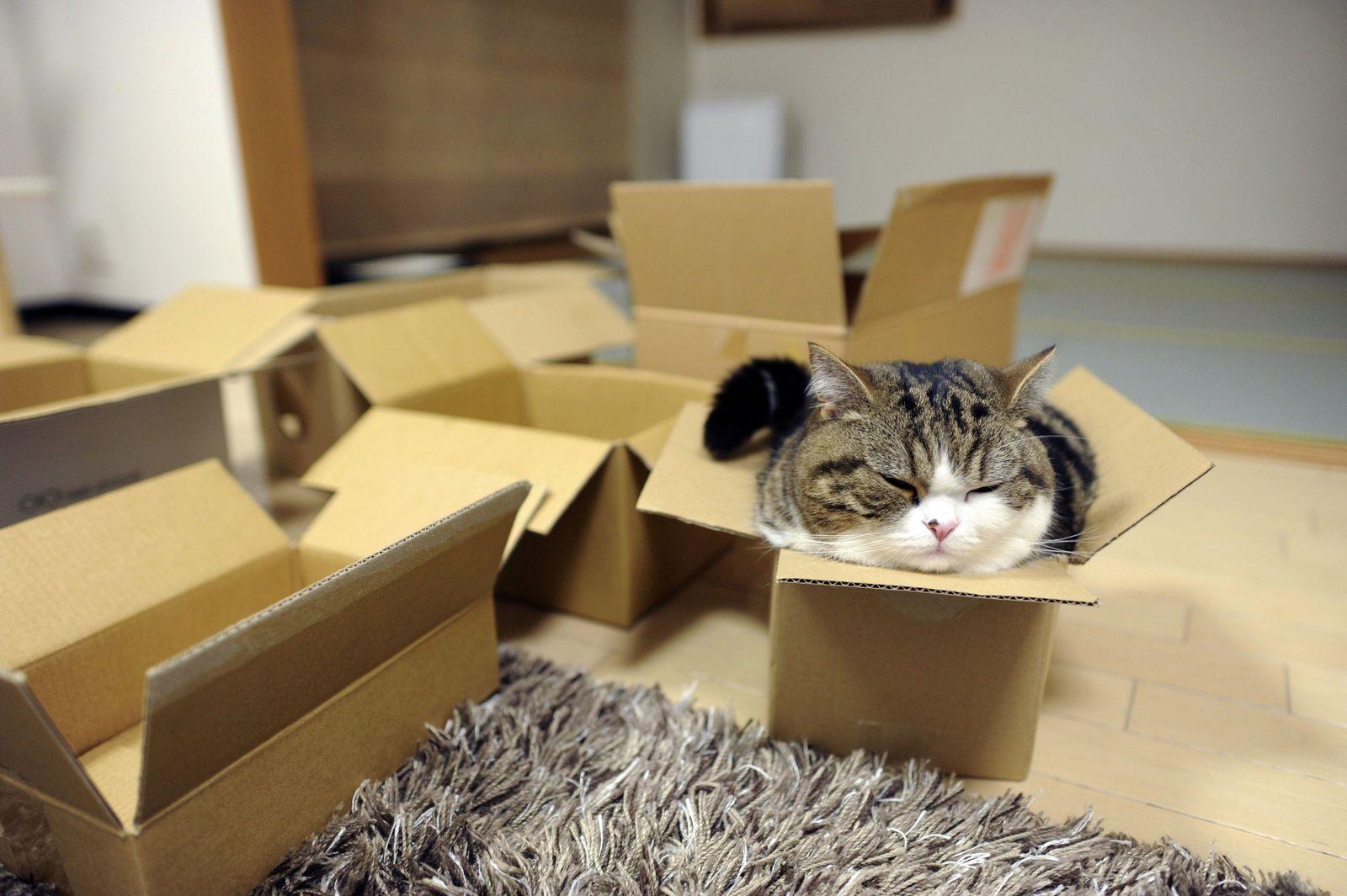 Internet/ Katzen