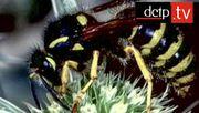 Prof. Dr. Raghavendra Gadagkar über die Evolution sozialer Insekten