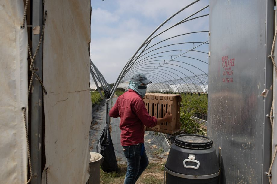 João Rosado is planning on building a third plantation once the pandemic has come to an end.