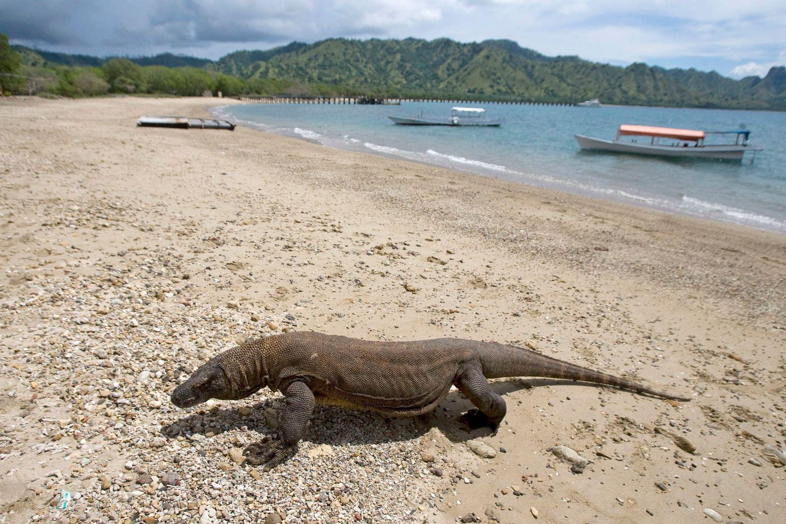 Komodo/ Insel/ Tourismus
