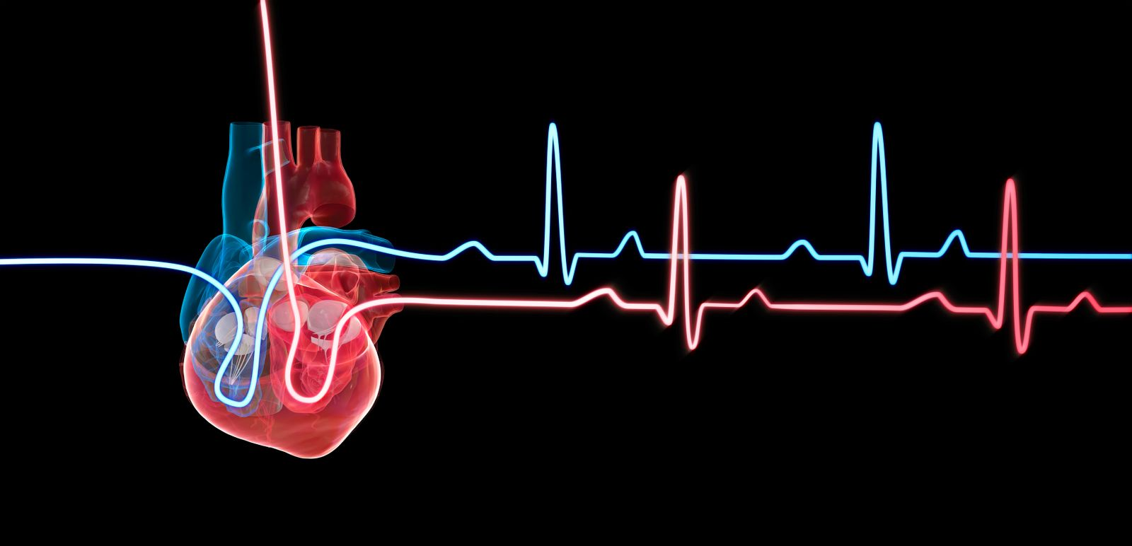 Human heart with a heartbeat traces, illustration