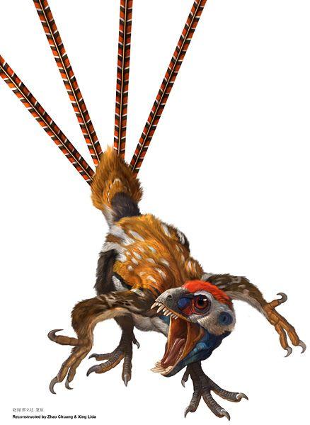 Epidexipteryx hui: Balz mit Federn in der Kreidezeit
