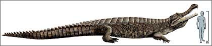 Urzeit-Krokodil Sarcosuchus imperator: Irgendwann werden die Krokodile so groß, dass kein Baum mehr reicht als Zufluchtsort