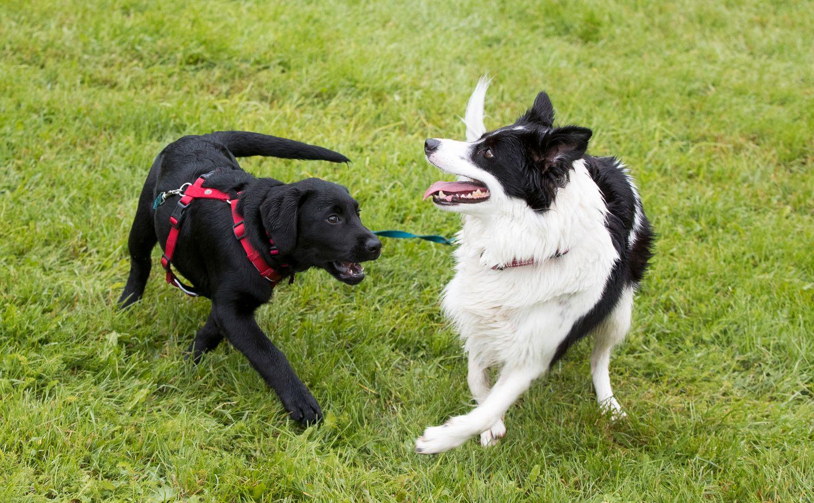 Mysteriöse Hundekrankheit in Norwegen