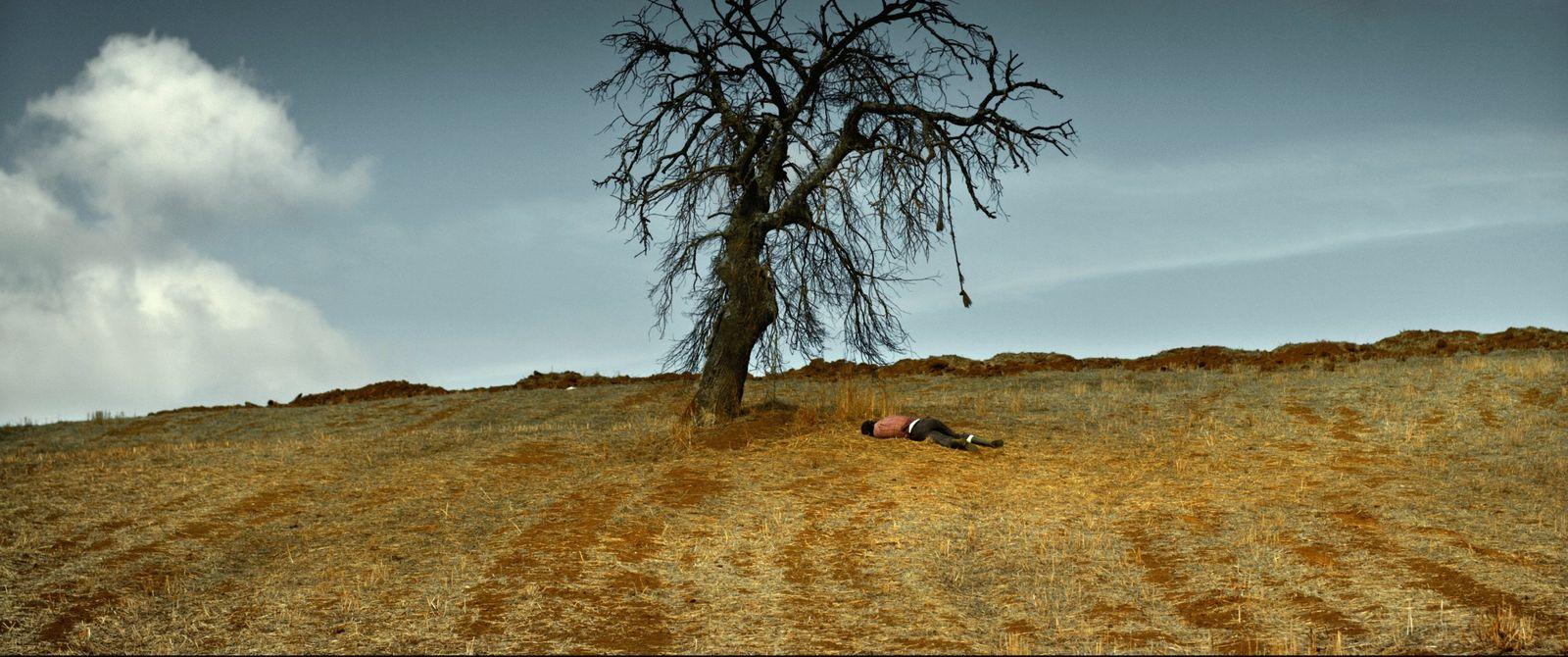 Film/ The Wild Pear Tree
