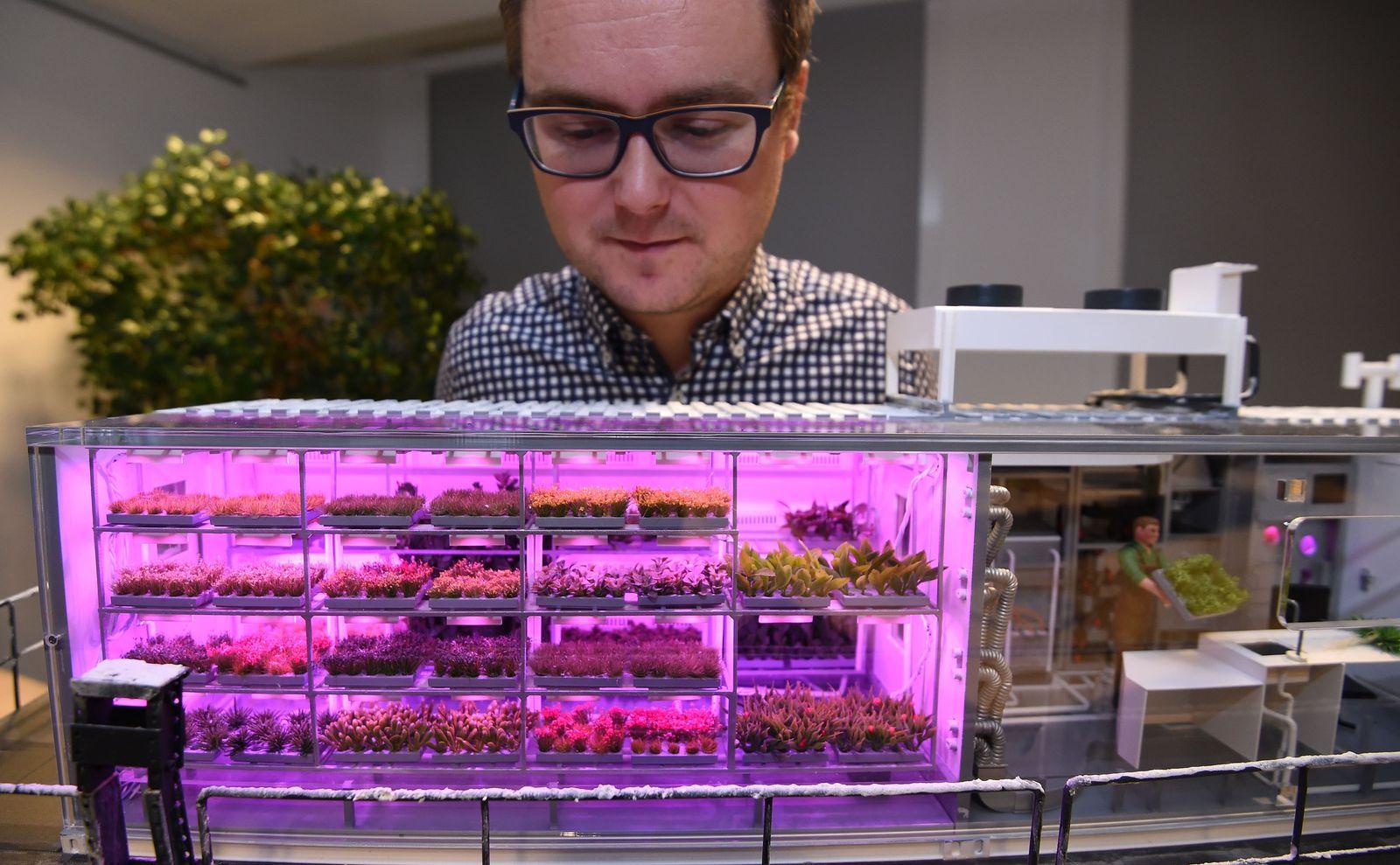 Bremer Wissenschaftler wollen in der Antarktis Gemüse züchten