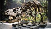 Die Mär vom Mini-T-Rex