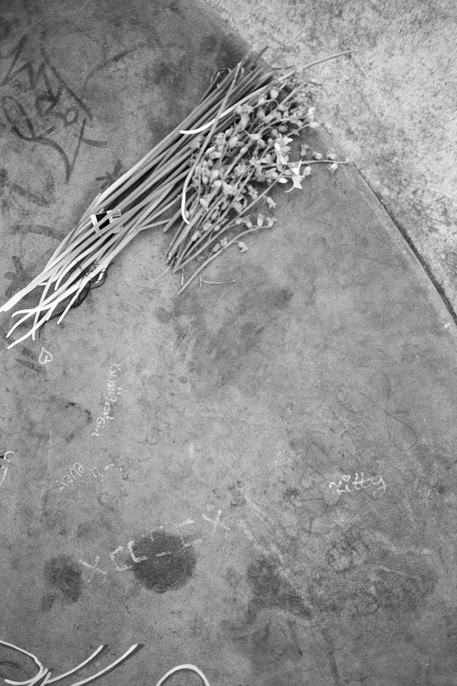 03_Blumen_auf_Beton