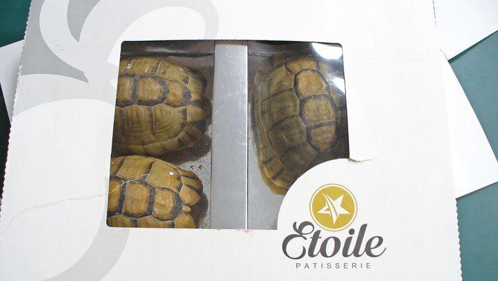 """Schmuggel: Schildkröten statt """"Schokolade"""""""