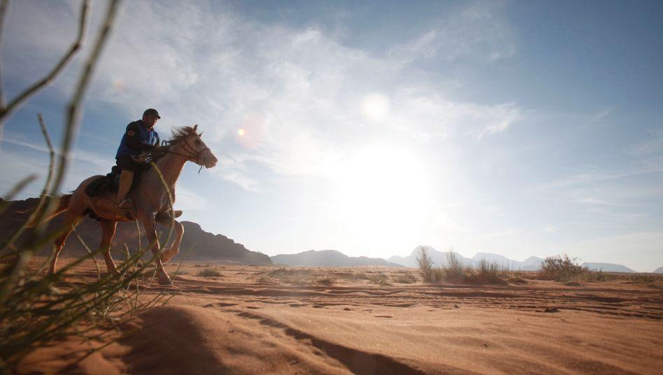 Beim Distanzreiten müssen Pferde extreme Strecken bewältigen