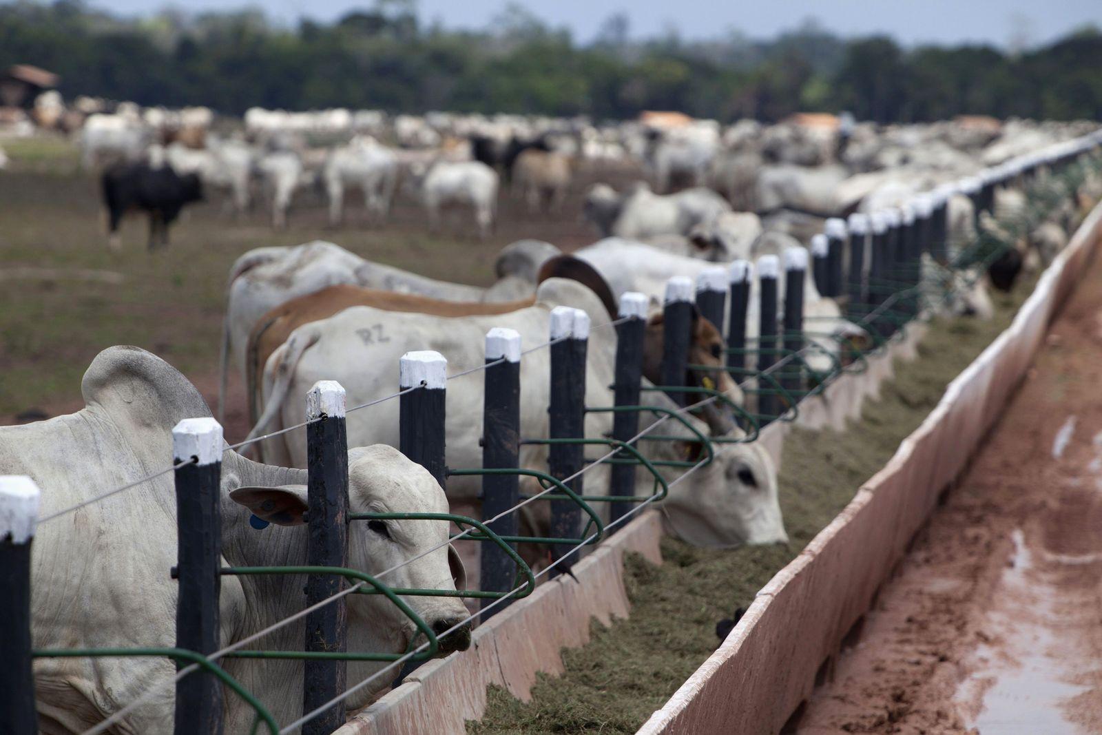 Brasilien / Konjunktur / Wirtschaft / Amazon / Rinder / Viehzucht
