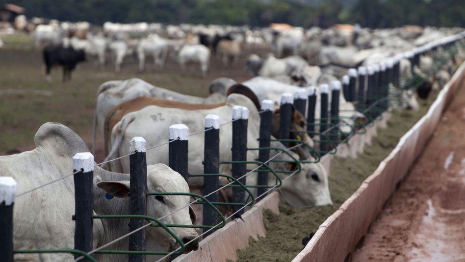 """Rinderzucht in Brasilien: """"Schwer zu ertragen"""""""