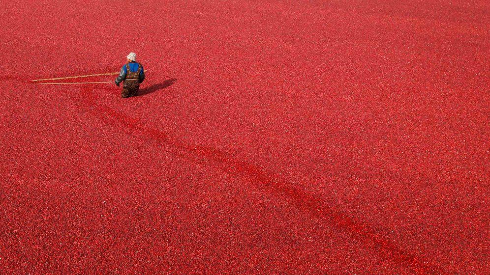 Cranberry kapseln wirkung pille