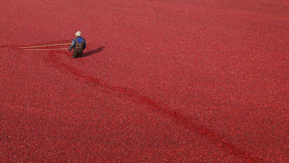 Cranberry: Kleine Beere - große Wirkung?