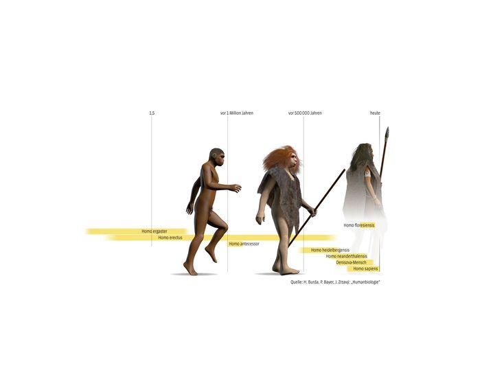Etappen der Menschwerdung nach bisherigen Erkenntnissen