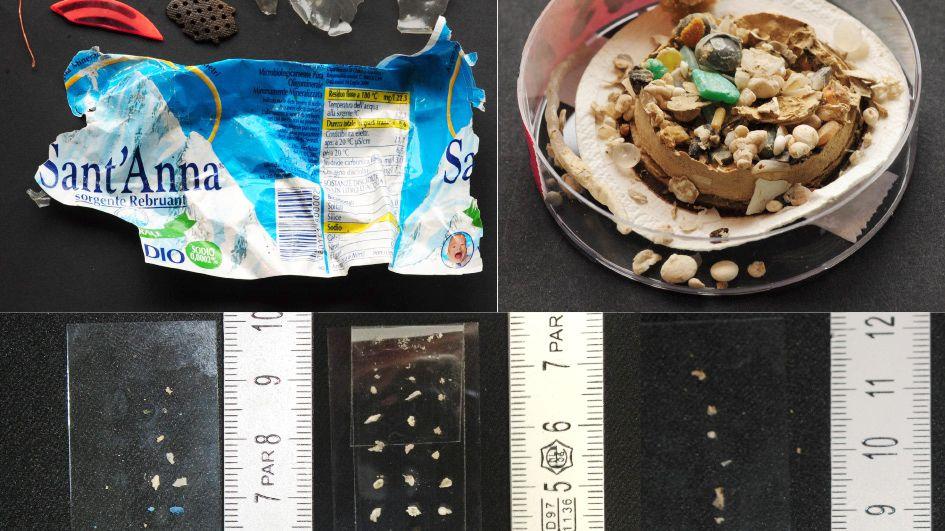 Giftige Teilchen: Wenn Fische das Plastik fressen, gelangt es leicht auch in die menschliche Nahrungskette